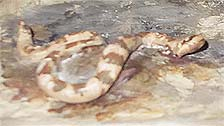 Painted Desert Detail - Rattlesnake